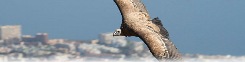 Audio guide of Benalmádena Cable Car - Bird